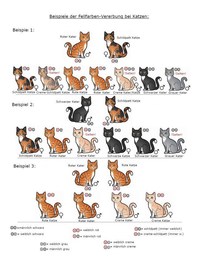 Beispiele_der_Fellfarben-Vererbung_bei_Katzen_2